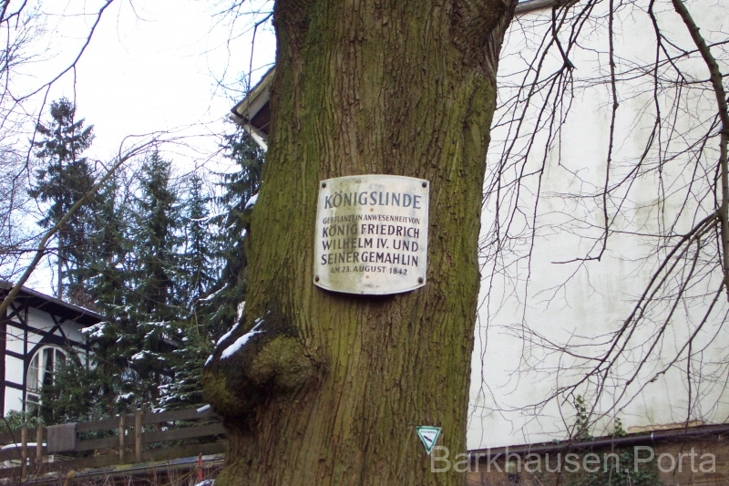 Infotafel Königslinde 2001